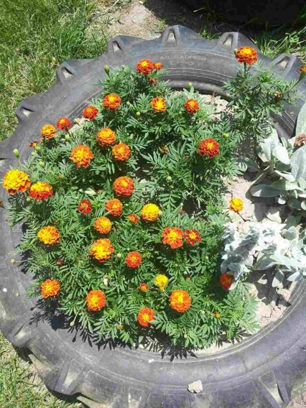 Донација цвећа од ЈКП