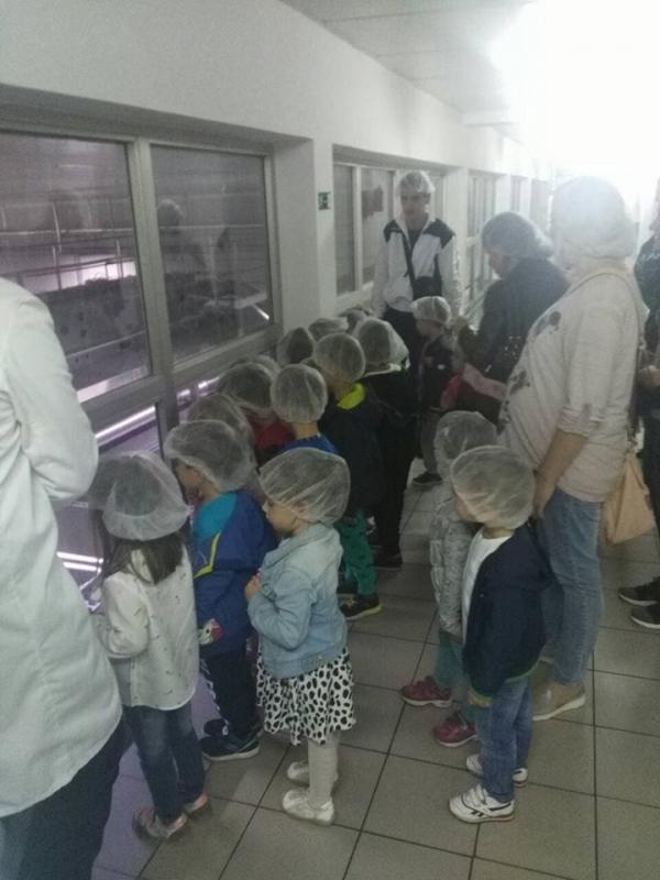 Упознавање са процесом прављења млека